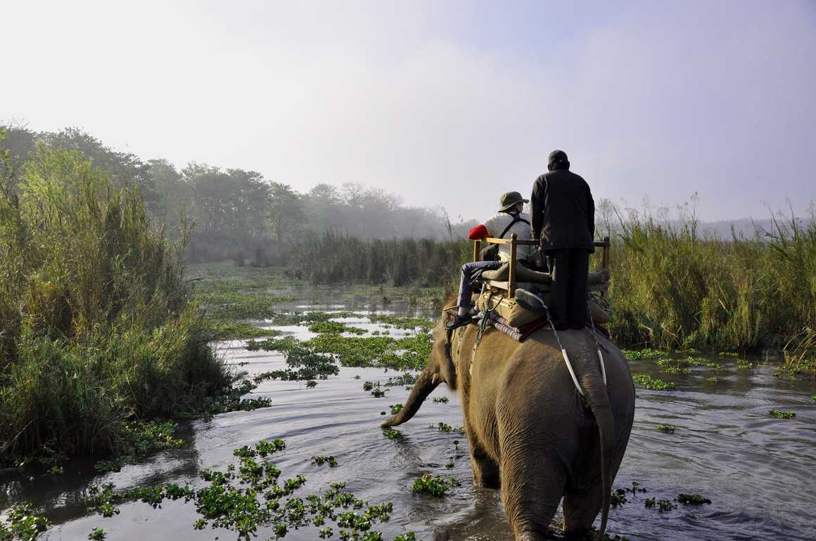 Elephant during a safari in Chitwan National Park