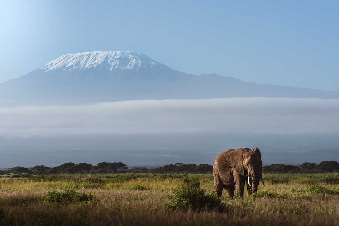 Elephant in front of the Mount Kilimanjaro