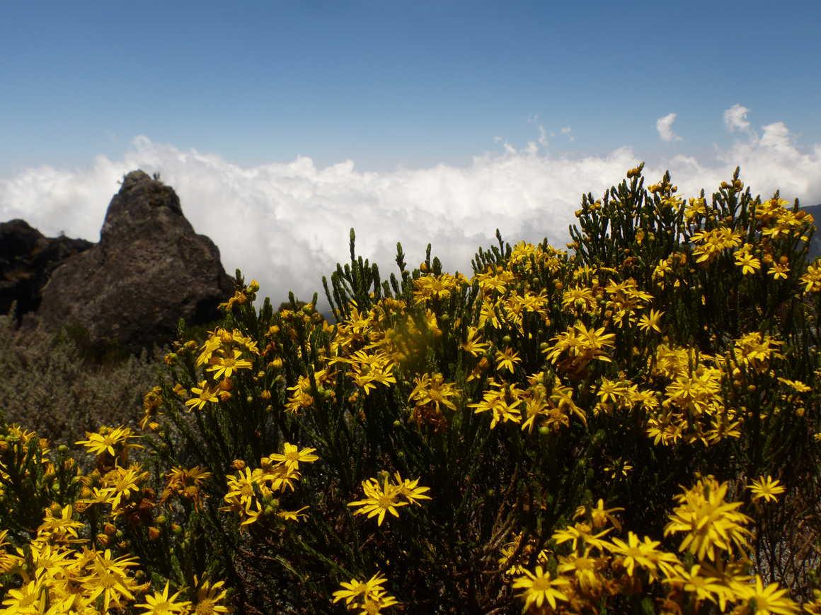 Flora during Mount Kilimanjaro ascent