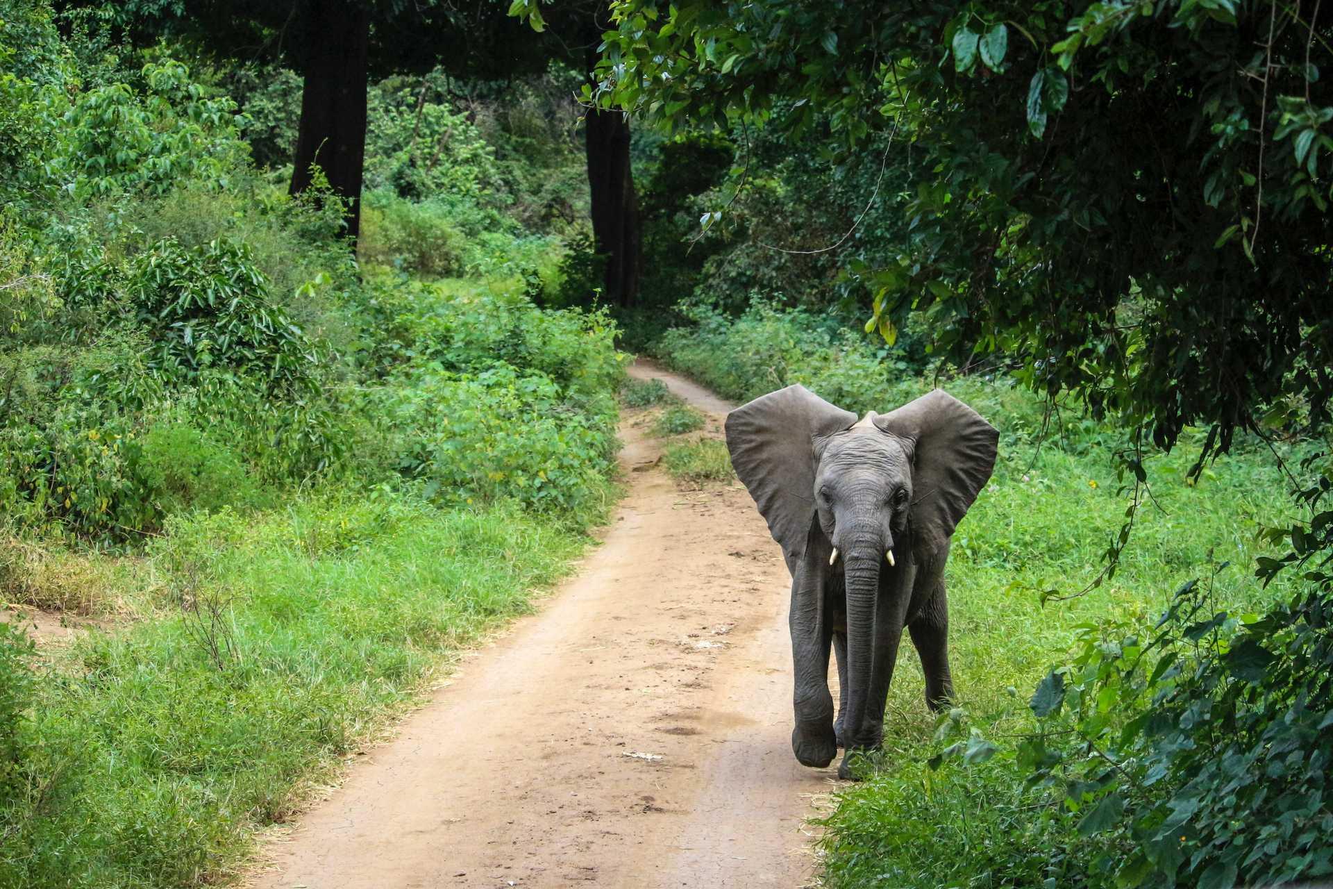 Baby elephant during a safari