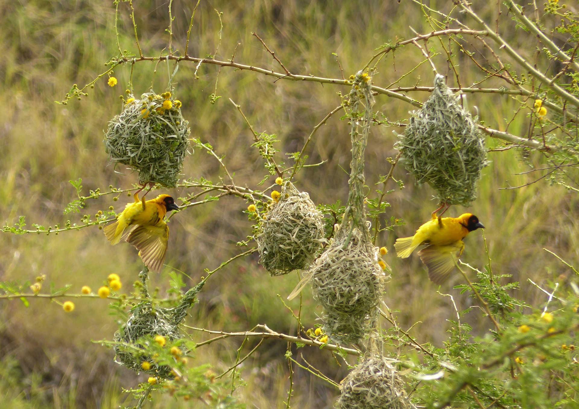 Suspended birds in Serengeti National Park