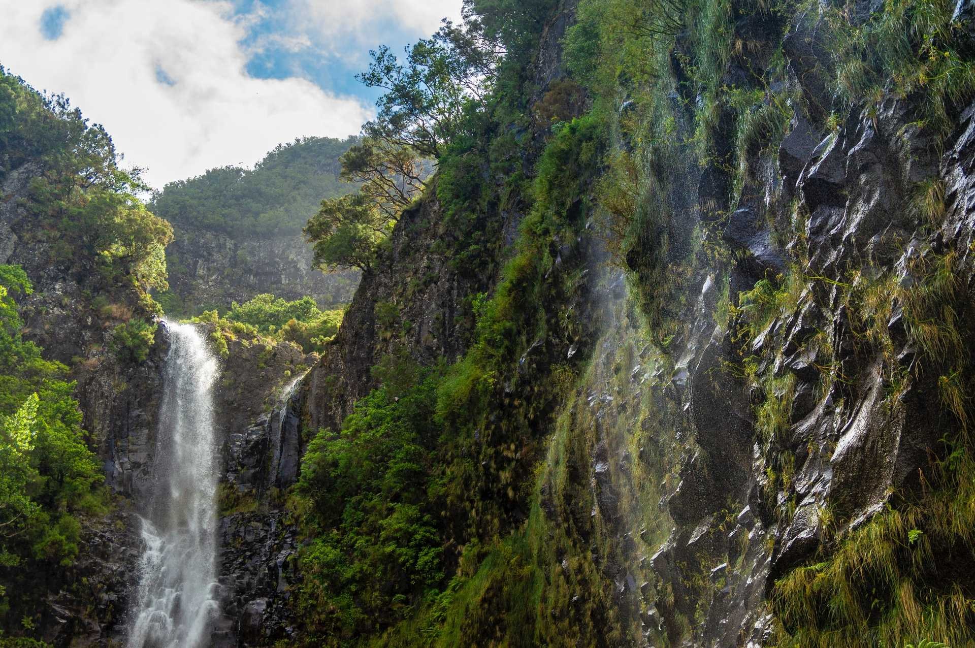 Waterfall in the forest, Madeira