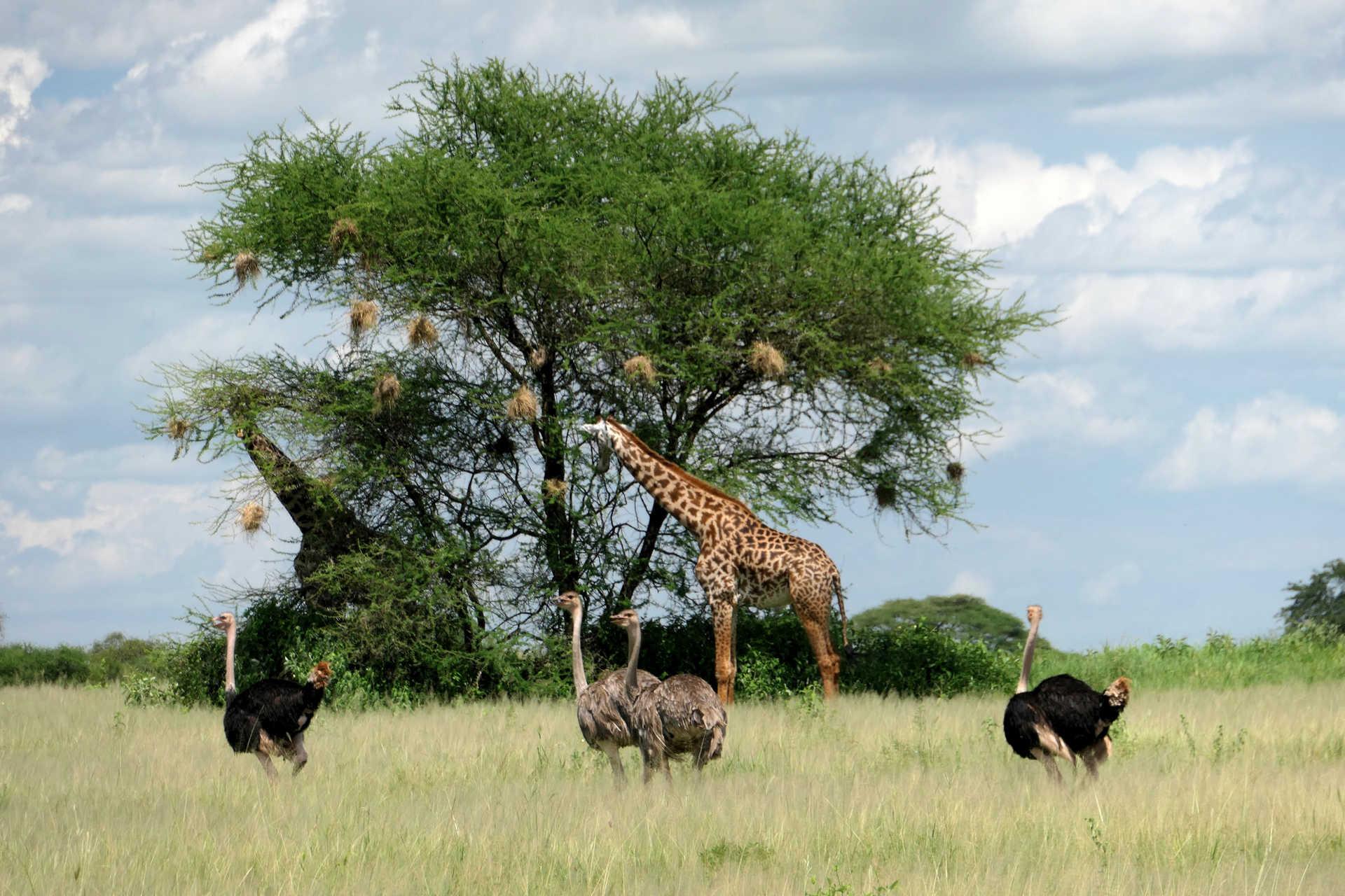 Wild animals in a Tanzanian Park