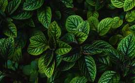 Deep green foliage on Madeira