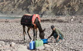 Local guide taking care of a mule in the High Atlas region