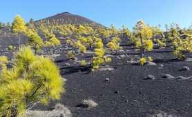 Volcanic landscape on La Palma