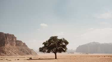 A single tree standing alone in the desert