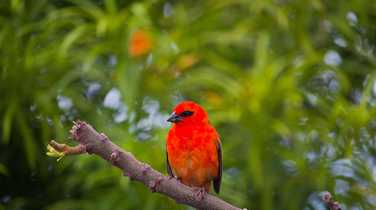 Bird life on Reunion Island