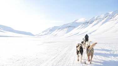 Dog sledding in Arctic, Spitsbergen