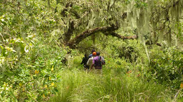 Hikers during a safari