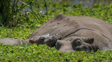 Rhino in the Serengeti National Park