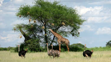 Wild animals in a Tanzanian Park