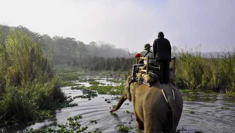 Elephant during a safari in Chitwan National Park