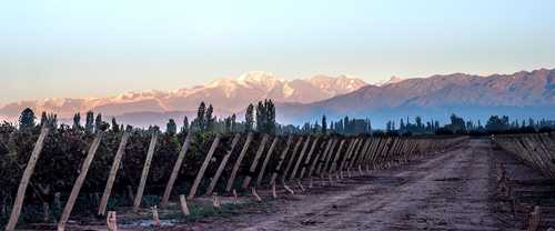Aconcagua vineyards