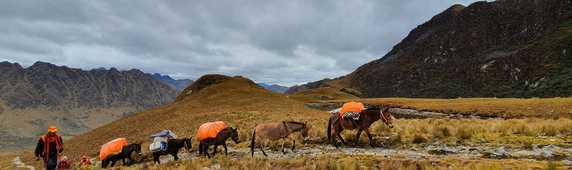 Kandoo team member with mules in Peru