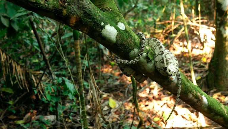 Snake in the rainforest in Peru
