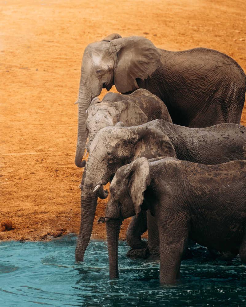 Herd of elephant in Tanzania