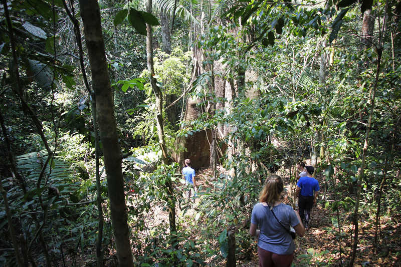 Hikers in the Amazon rainforest